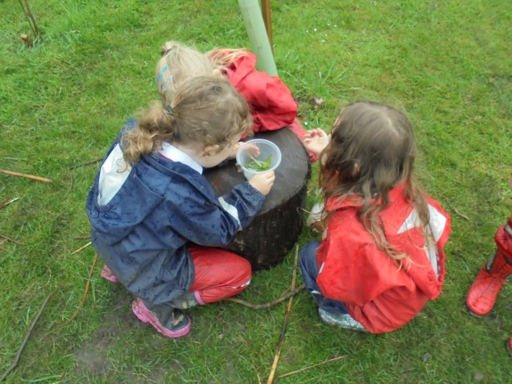 Forest Learning (1)