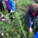 Year 3-4 Allotment_2