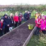 Year 3-4 Allotment_4